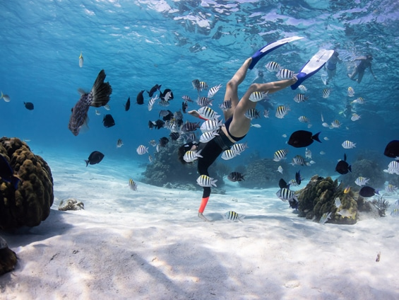Snorkelling-BC-Destination